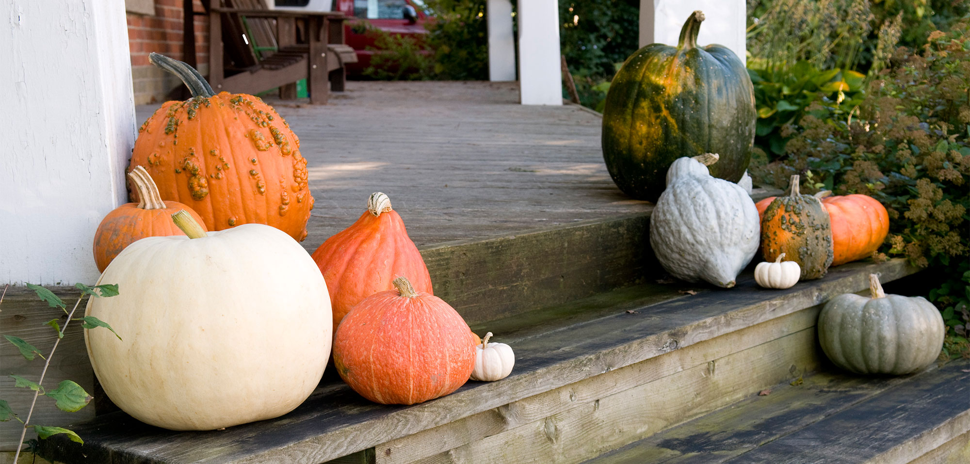 Variety of different kinds of pumpkins