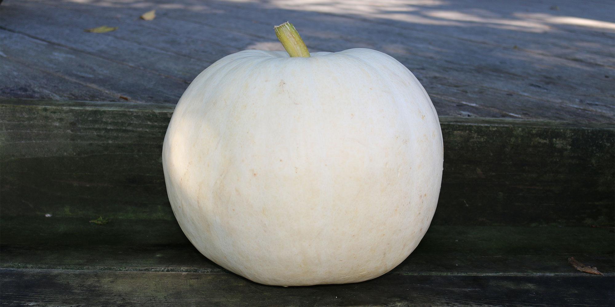 A white Lumina pumpkin