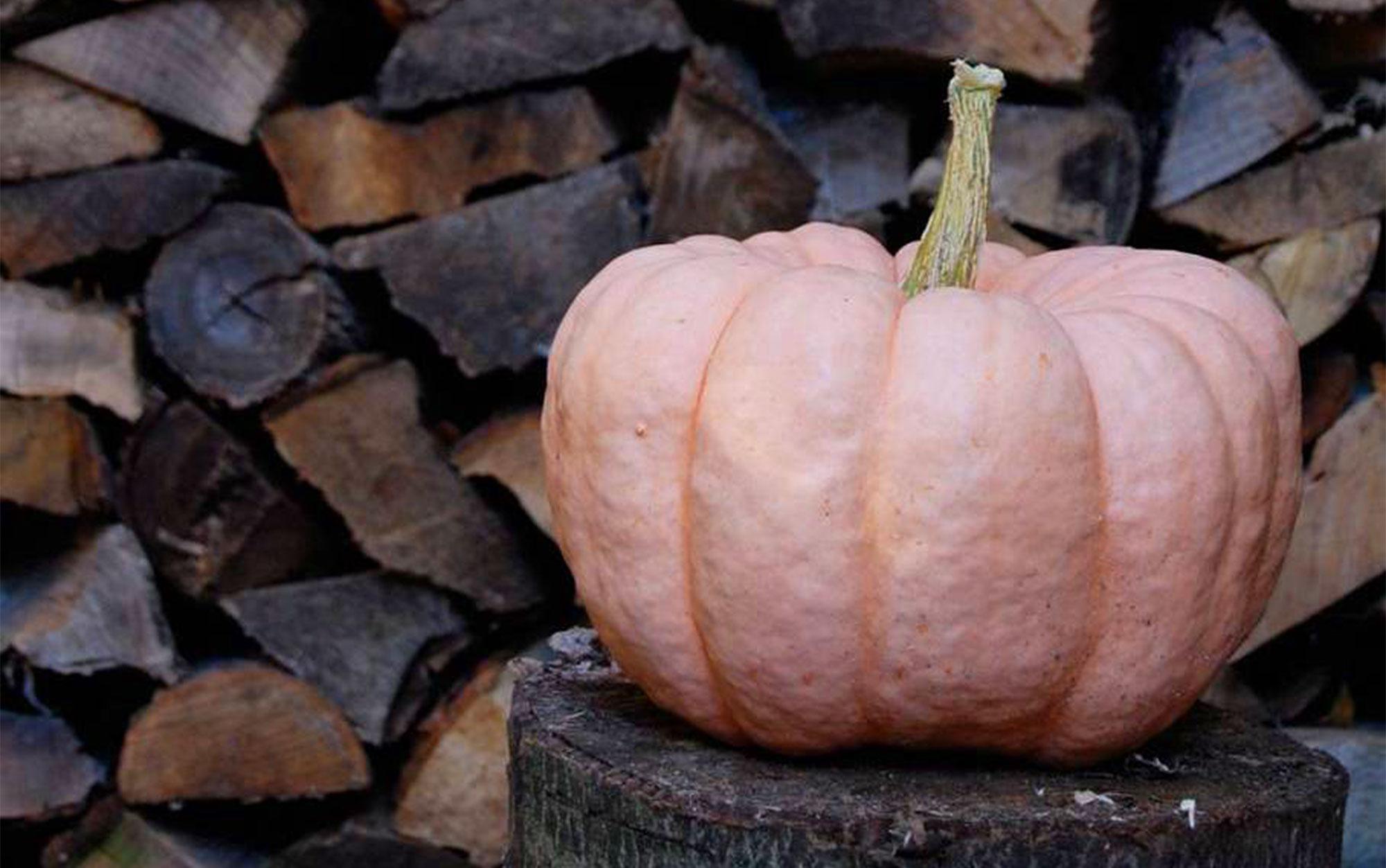 A pink Porcelain Doll pumpkin
