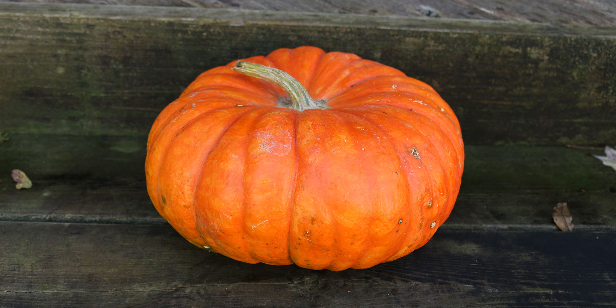 A bright-orange Cinderella pumpkin