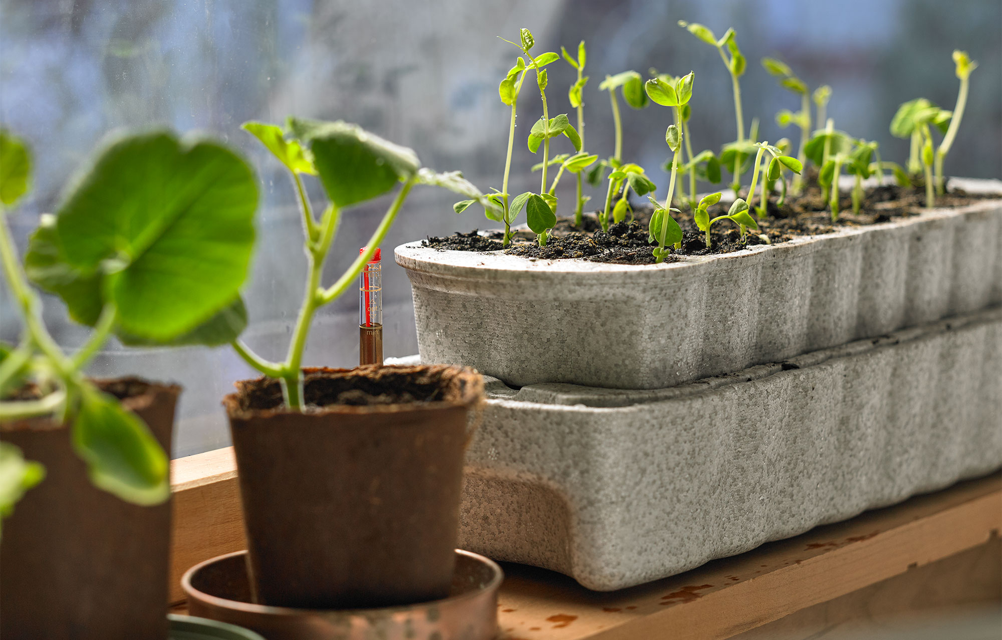 Seeding pots and trays