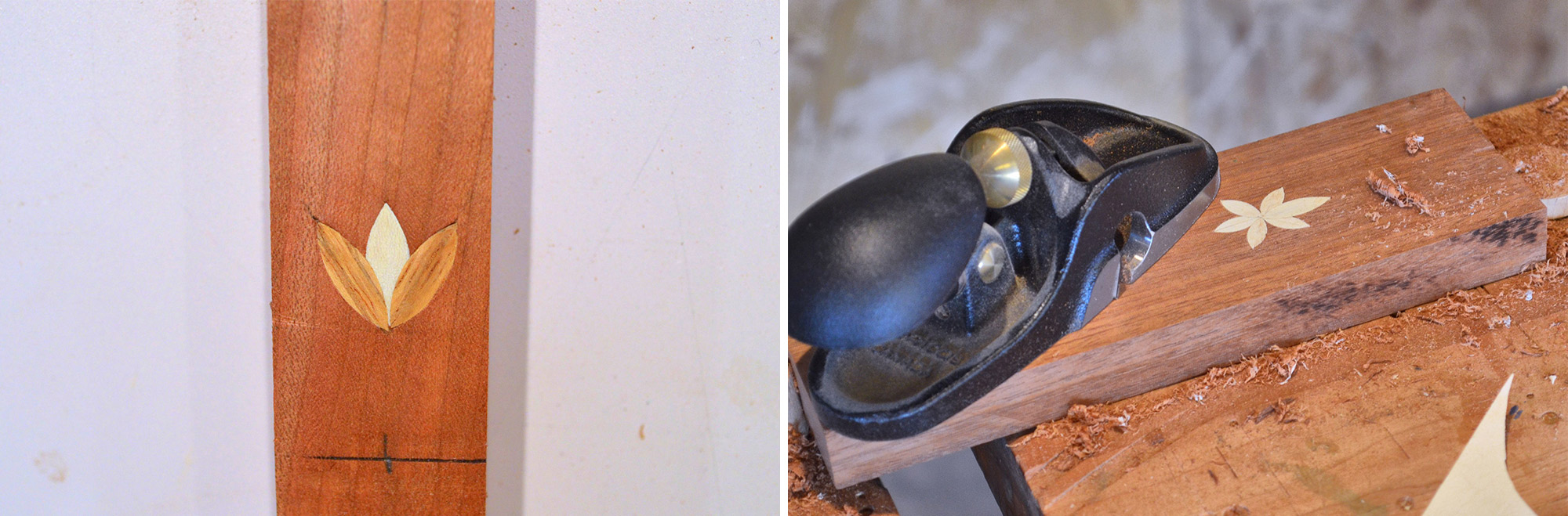Image left: Variation. Image right: Six-point bellflower.