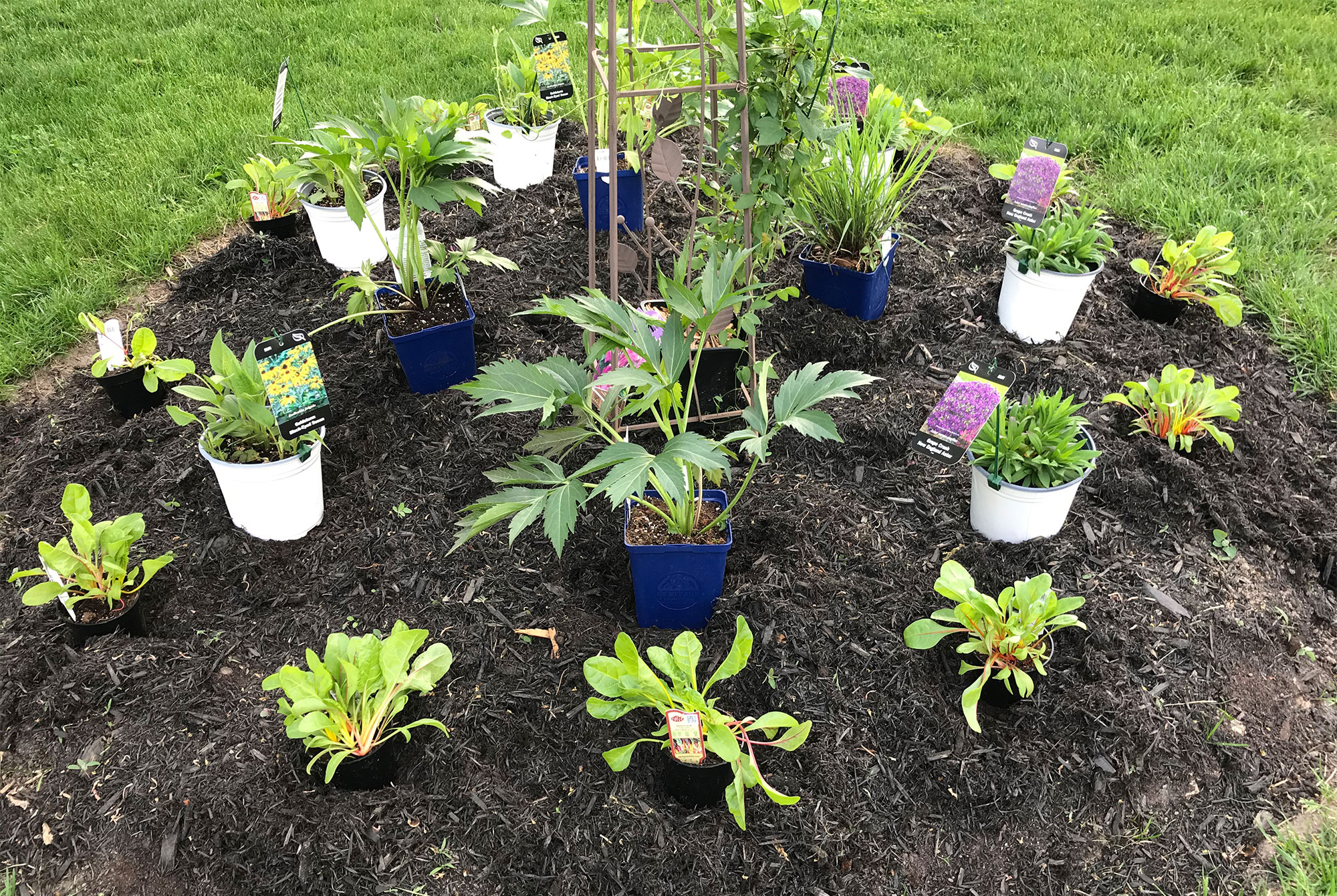 Potted plants positioned in newly dug garden bed.