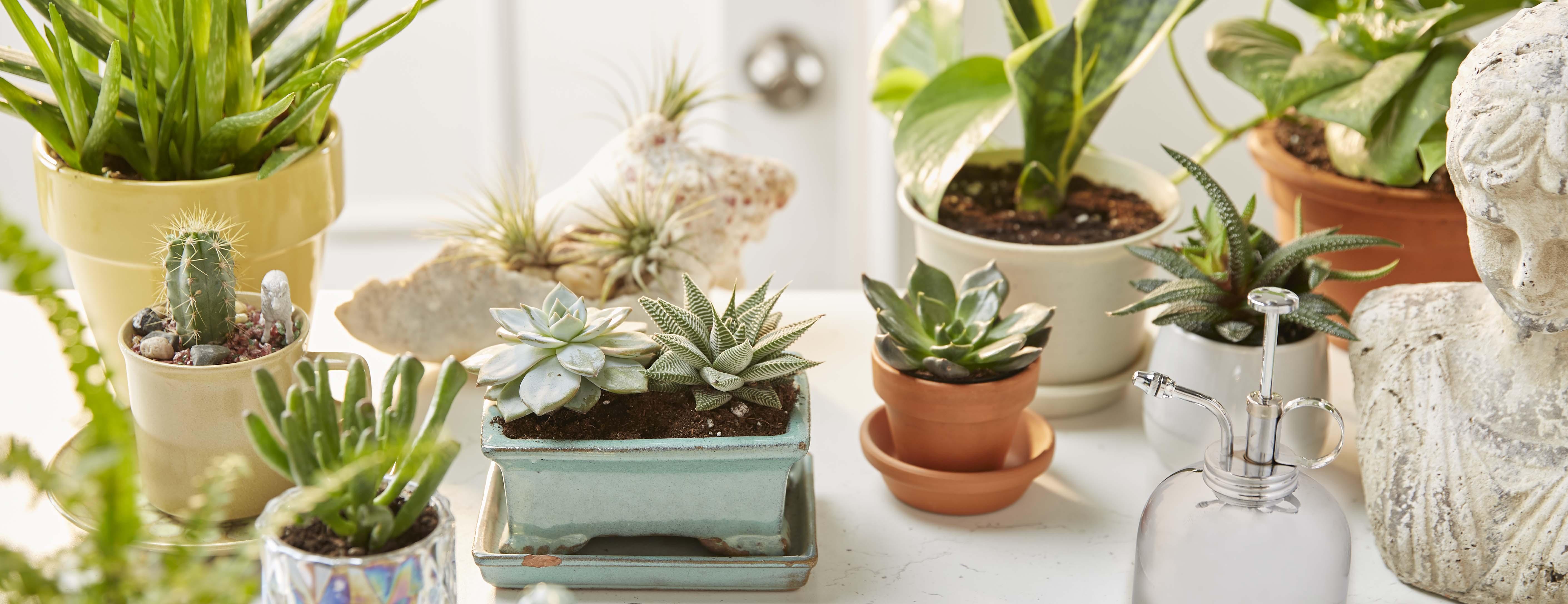 Des articles pour vous faire plaisir aux essentiels du quotidien, nous offrons une gamme de produits qui vous aident à personnaliser votre maison.