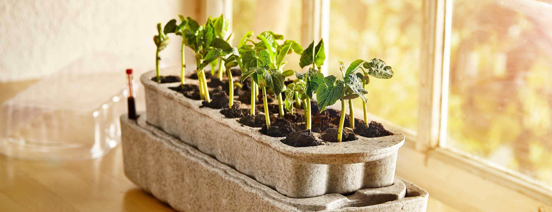 Jardinage - À partir des semis jusqu'à la mise en conserve de vos récoltes, nous répondons à vos besoins de jardinier en toute saison.