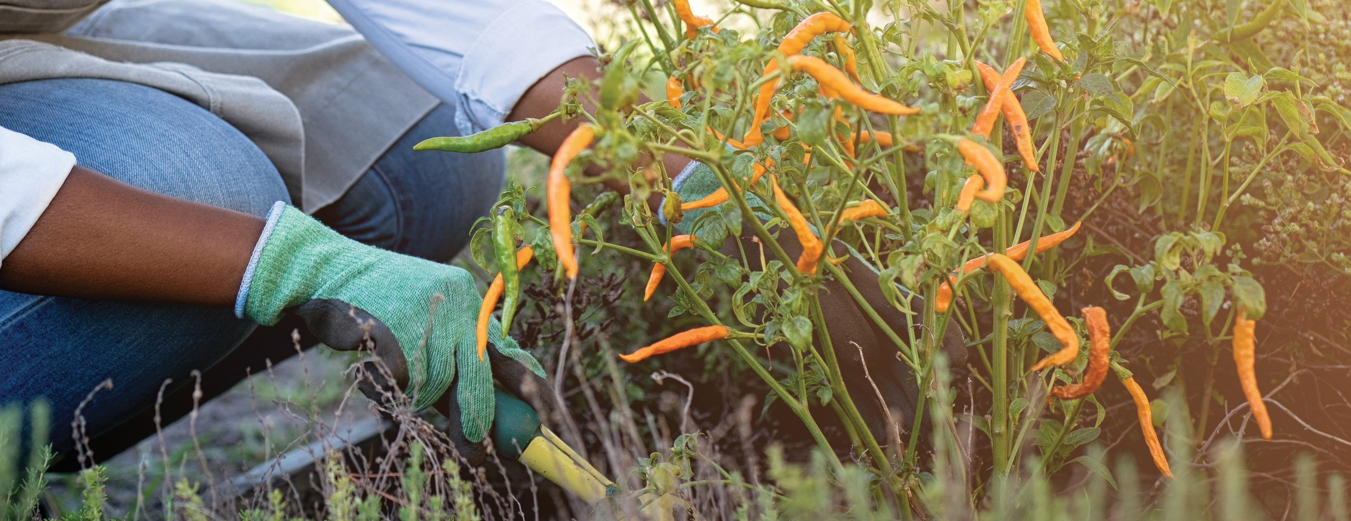 From starting your seeds to gathering your harvest, we have gardeners covered in every season.