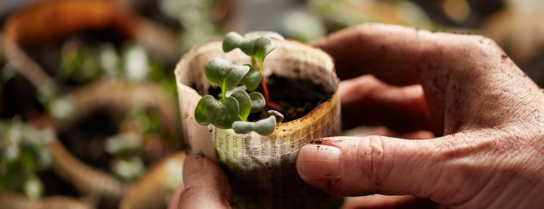 Jardinage. Des semis à la récolte, nous avons tout le nécessaire pour jardiner, quelle que soit la saison!